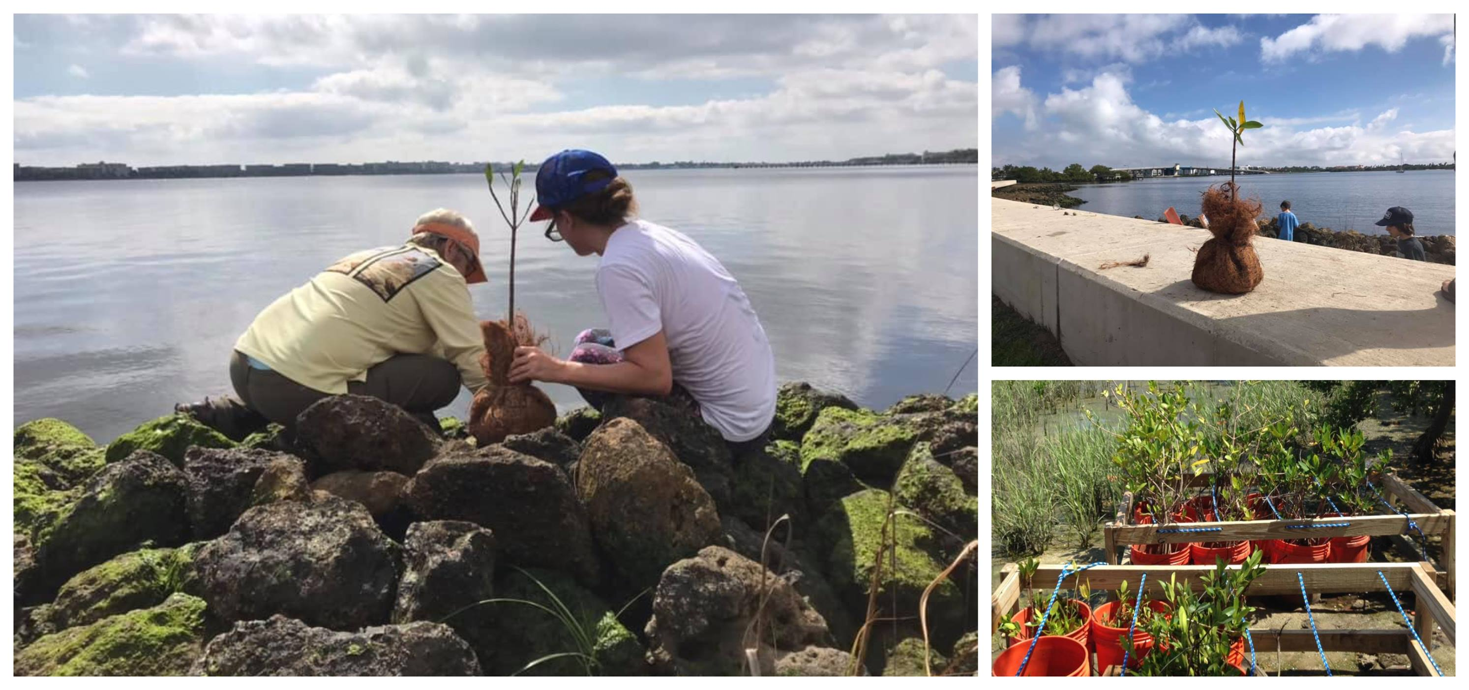 April 13th – Mangrove Transplanting at the Lake Worth Lagoon